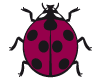 Coccinelle Framboise